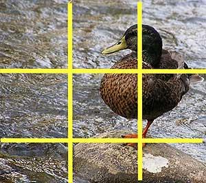 pravila u fotografisanju